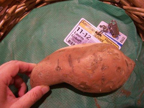as biology coursework potato and carrot