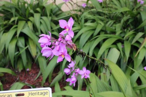 Hermaphrodite - Flower